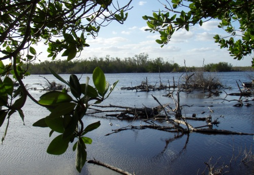 The expedition will navigate Blacktip Island's infamous booby pond in traditional catboats.