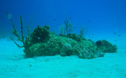 Reactor Reef was one of Blacktip's most popular night dive spots before the Caribbean island's authorities closed the site.