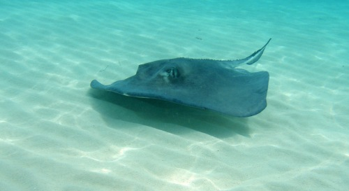 Spotting a stingray just got more expensive with Eagle Ray Divers' new pay-per-fish pricing.
