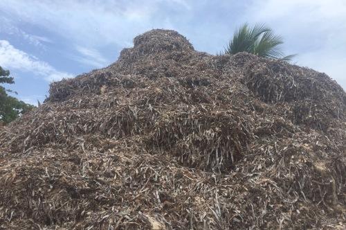 mount sargassumore