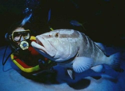 math grouper