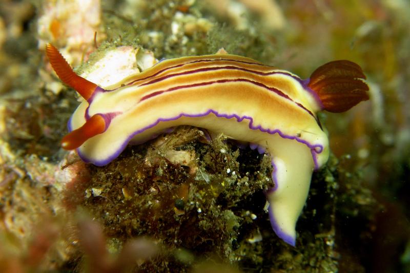 nudibranch writing