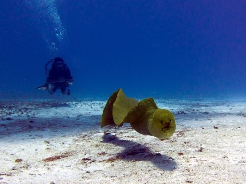 underwater screaming